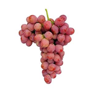 Frutas falc uva de mesa denominaci n de origen vinalop variedad aledo - Variedades de uva de mesa ...